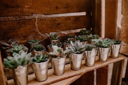 cadeaux invites succulentes